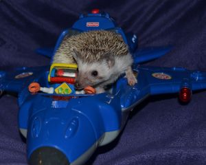 Super -Sonic the Hedgehog